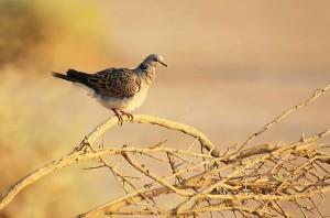 chasse touristique marrakech